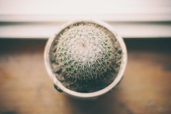 Varios estudios científicos demuestran que las plantas en la oficina mejoran la productividad y felicidad de los empleados